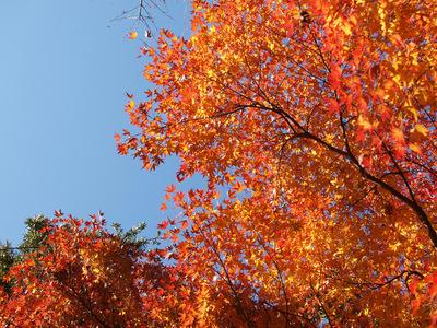 鎌倉文学館の紅葉