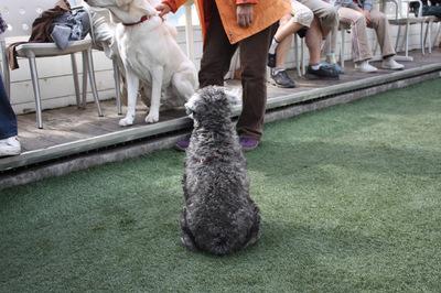 @DOG GARDEN RESORT 鵠沼