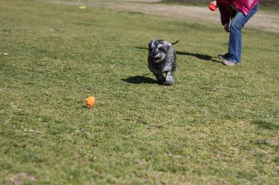 子犬走る!