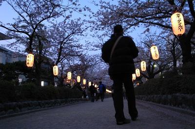 夜桜@段葛