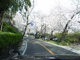 春の鎌倉山